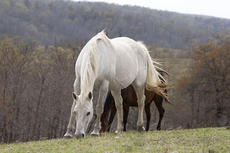 пасутся дикие лошади
