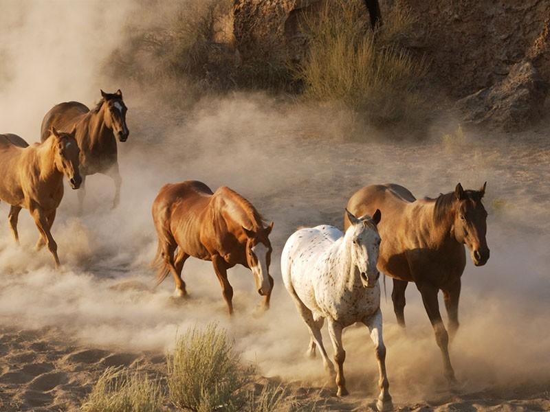 табун лошадей в заповеднике