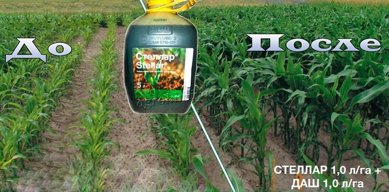 гербицид Стеллар на кукурузу