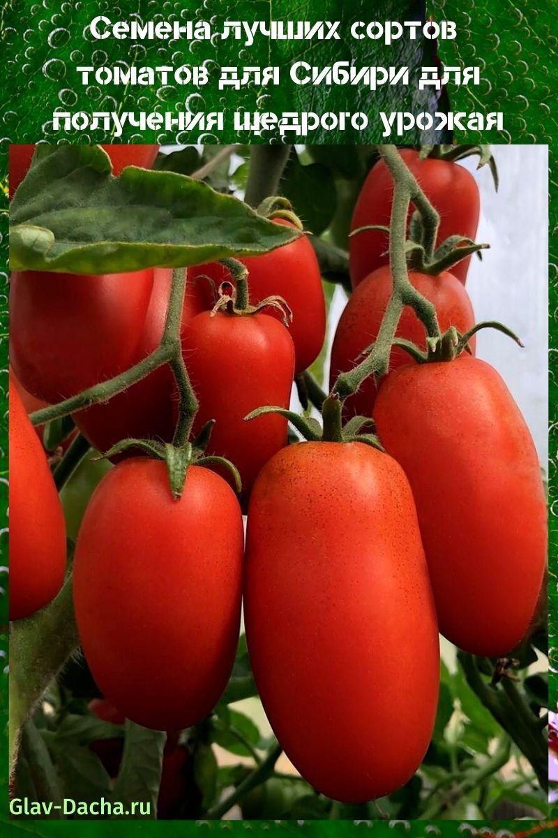 семена лучших сортов томатов для Сибири