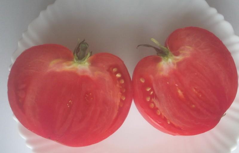 плоды томата гордость грайтмара