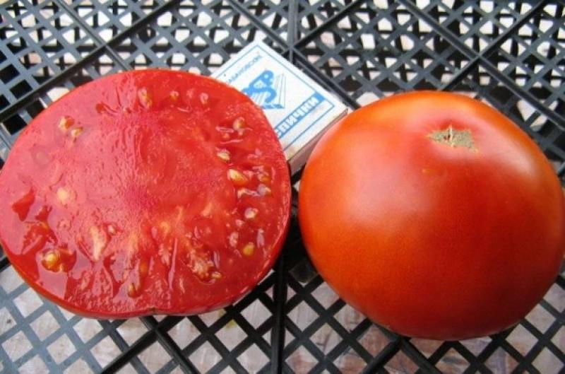 помидоры сорта король ранних