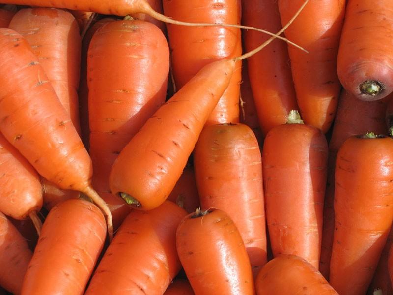морковь сорта каротель
