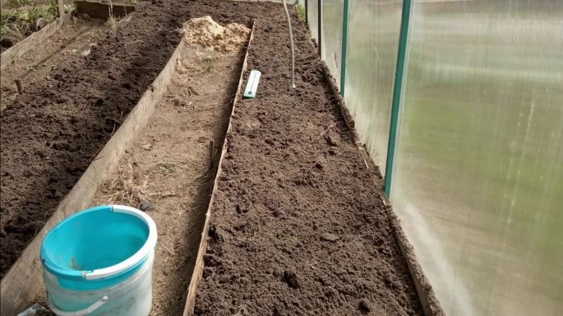 выращивание огурцов на теплых грядках