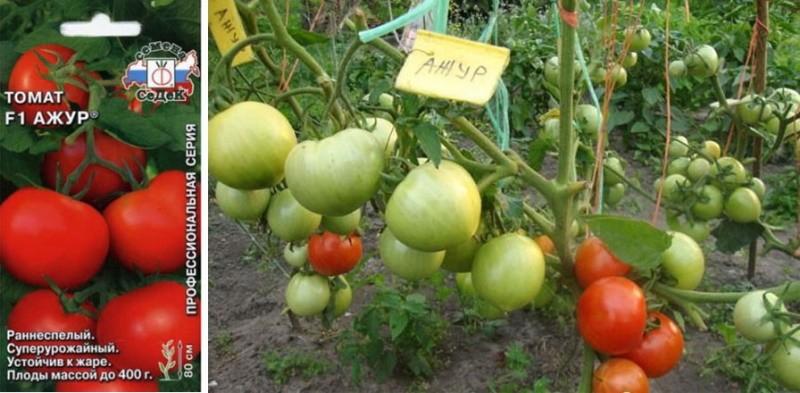 томат сорта ажур на открытой грядке