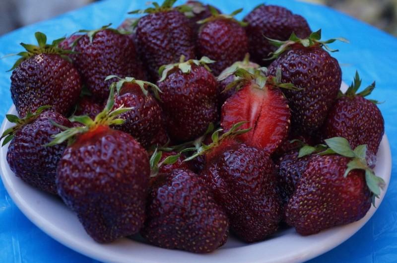 ягоды клубники черный принц