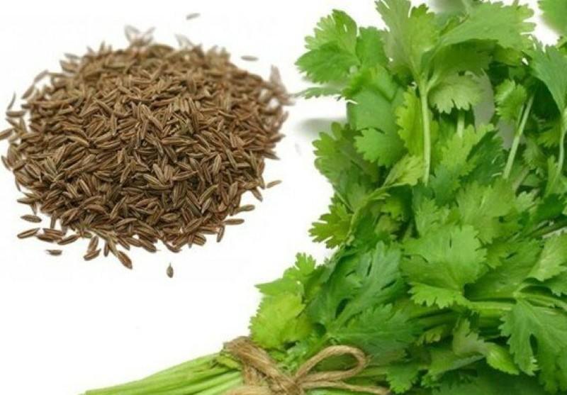 гладкие и ароматные семена петрушки