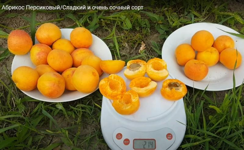 плоды персикового абрикоса