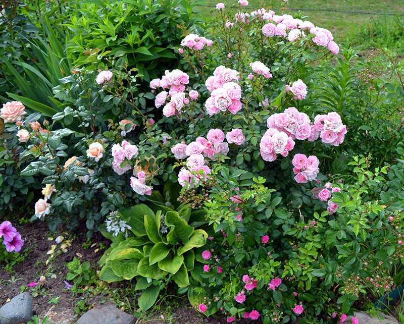 композиция с розой Боника 82