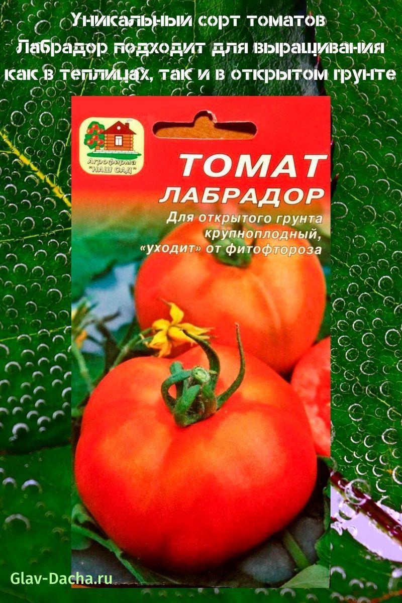 сорт томатов Лабрадор
