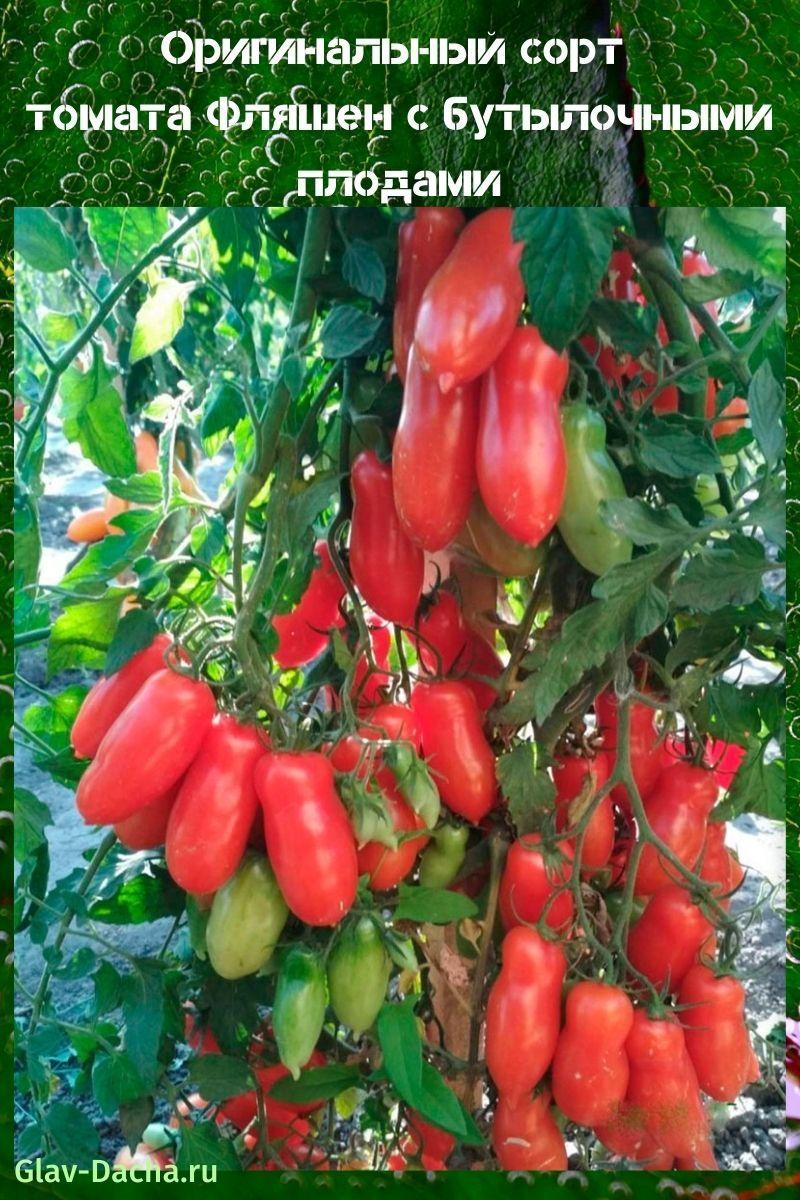 томат Фляшен