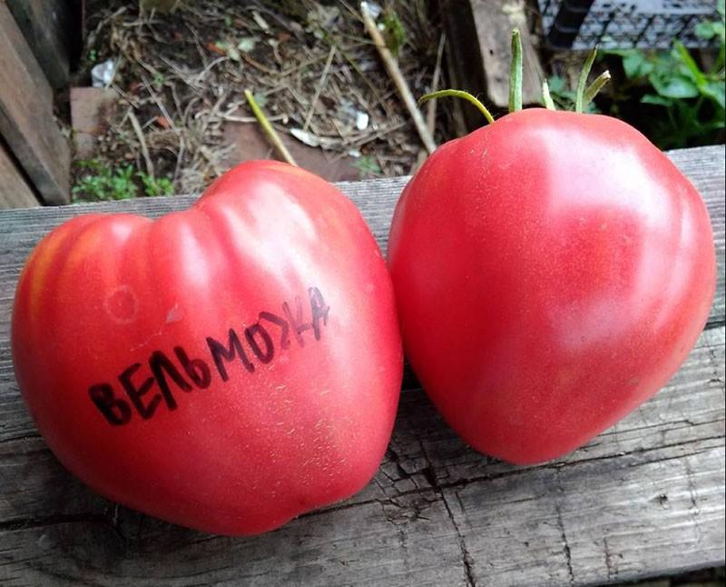 крупные плоды томата Вельможа