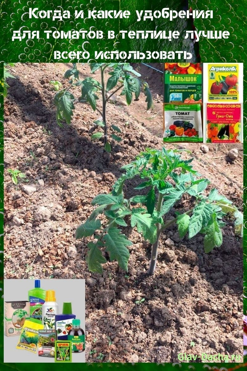 удобрения для томатов в теплице