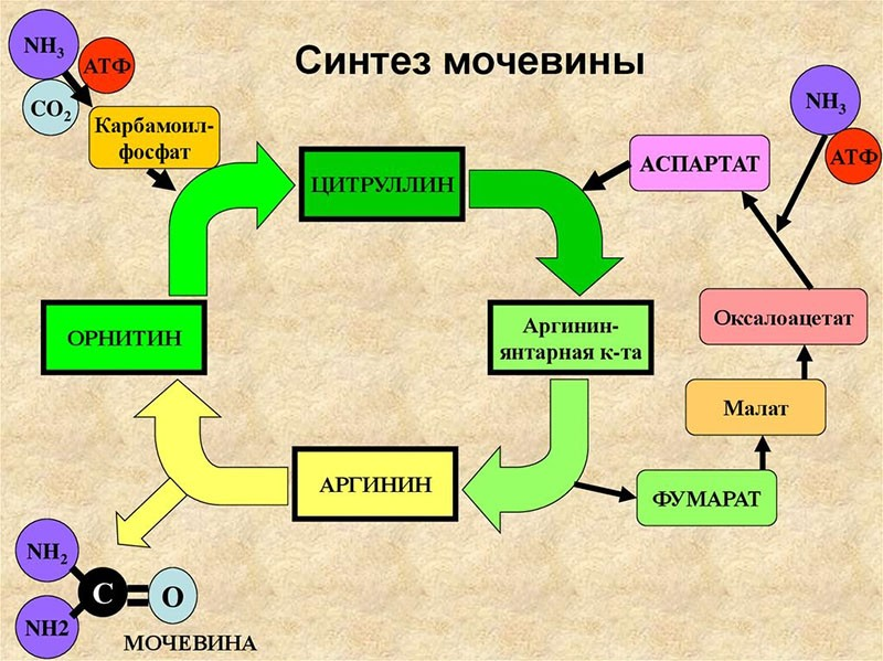 состав препарата гепатоджект
