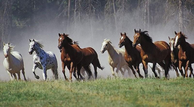 разные масти лошадей