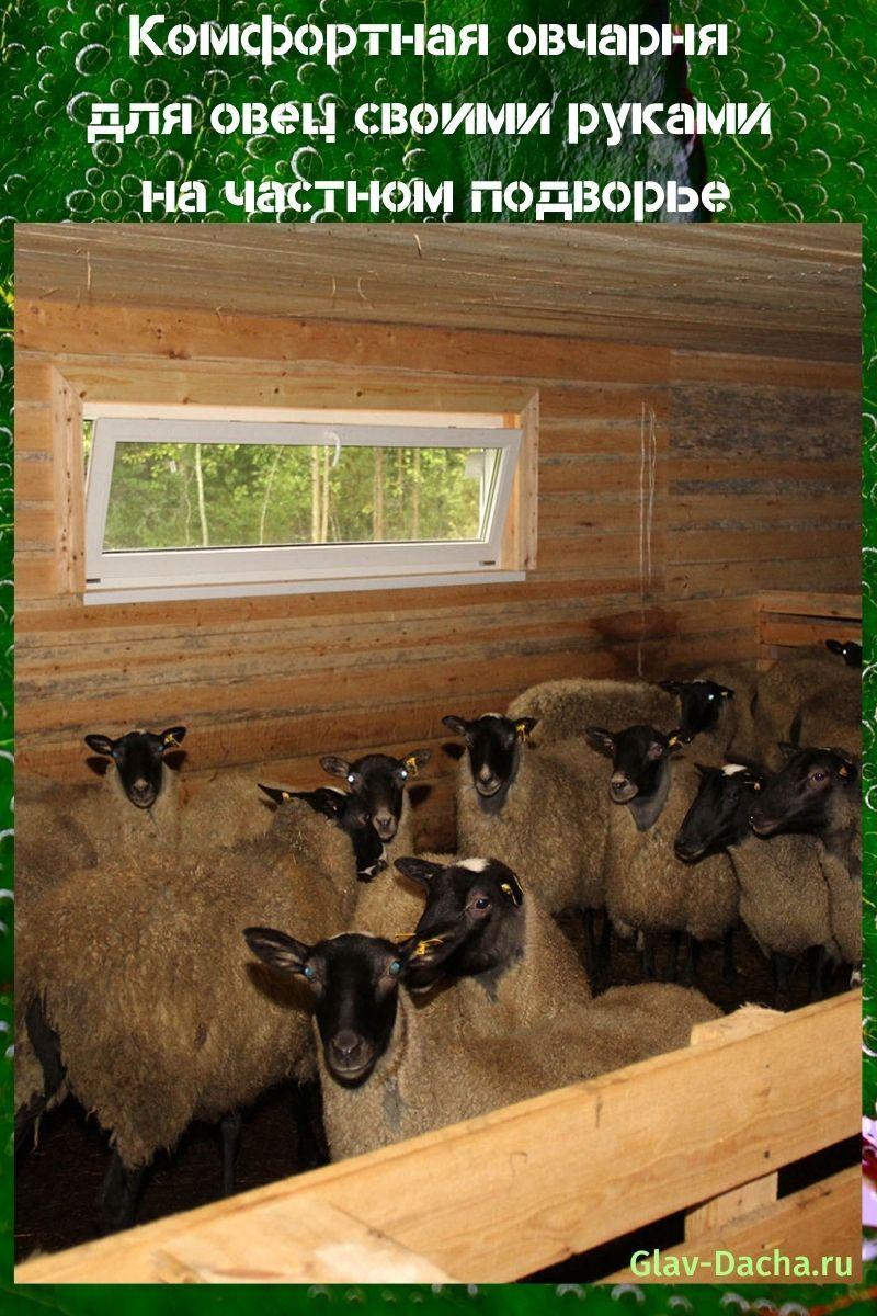 овчарня для овец своими руками
