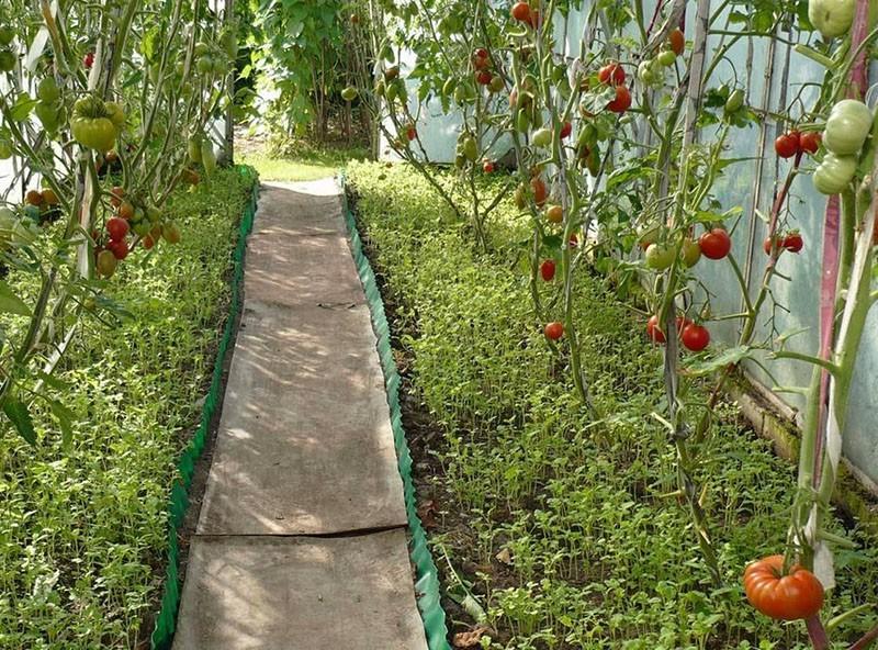 сидераты для улучшения качества урожая