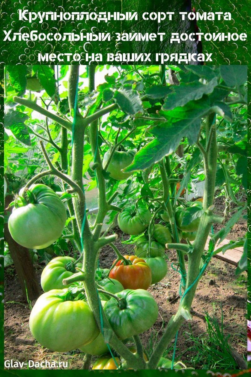 сорт томата хлебосольный