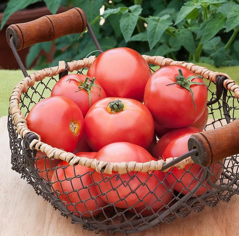 созрели плоды томата торбей