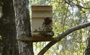 Хитрости пчеловодства — ловушки для пчел