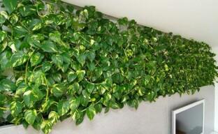 Быстрорастущие комнатные растения не заставят себя ждать