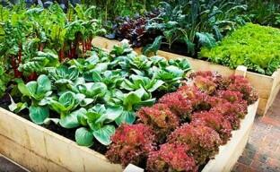 Высокие теплые грядки для «умного» огорода