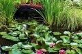 Секреты цветущего водоема – правильный уход за нимфеями в пруду