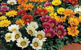 Однолетние цветы для красивой клумбы